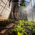 De milieuvriendelijke eigenschappen van zelfgemaakt compost