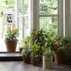 Kamerplanten: kopen van een kamerplant