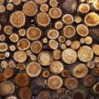Tropisch hardhout of milieuvriendelijk en duurzaam hout?