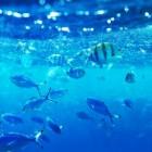 Nieuw vijverseizoen: meest geschikte vissen voor tuinvijver