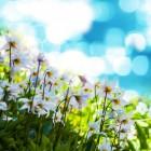Actief in de tuin zo richting het voorjaar