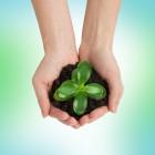 Hoe groeit een plant?