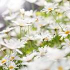 Winterbloeiers: ook een mooie tuin in de winter!