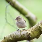 Vogeltjes kijken in eigen tuin, al of niet met kinderen