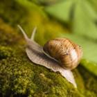 Bestrijden van slakken in de tuin! Hoe en met welke middelen