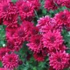 Een tuin vol prachtige bloemen van februari tot november