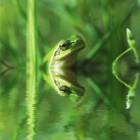 Kikkers en padden in de tuin: hoe krijg ik ze uit de tuin