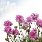 Turf en compost laten de planten in uw tuin stralen