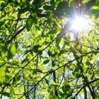Bomen snoeien: hoe en waarom