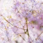 Kuipplanten in uw tuin