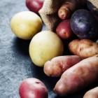 Aardappelen telen