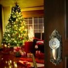 Geef je kerstboom een langer leven en zet de boom in de tuin