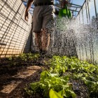 Milieuvriendelijk compost tegen ziekten in onze moestuin
