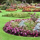 Tuinrenovatie is vaak beter dan vernieuwing van alle planten