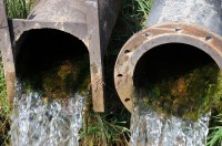 Wateroverlast Tuin Kleigrond : Wateroverlast en tuinieren op natte of vochtige grond huis en