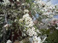 Tuinklussen in april wat kun je doen huis en tuin tuin