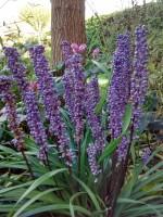 Verwonderlijk Schaduwplanten voor de tuin, er is keuze genoeg | Huis en Tuin: Tuin UU-04